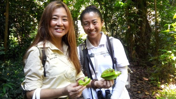 Teresa Teo Guttensohn (Cicada Tree Eco-Place) and Chloe Tan (NUS Toddycats) with freshly chomped starfruits (Averrhoa carambola), that plopped right in front of them during a free public Love MacRitchie Walk on Sunday, 9 Apr 2017.