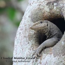 Competition for nesting holes…