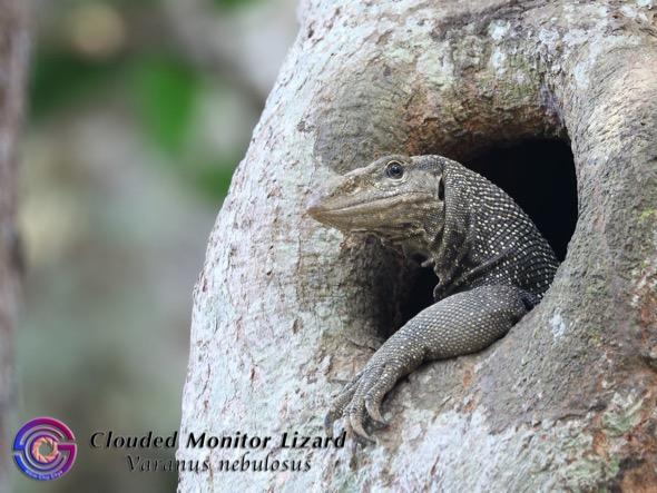 CloudedMonitor-nest hole [SimChipChye[ (1)