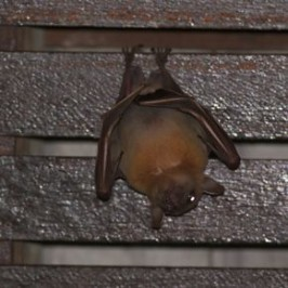 Bats in my porch: 12. Grooming
