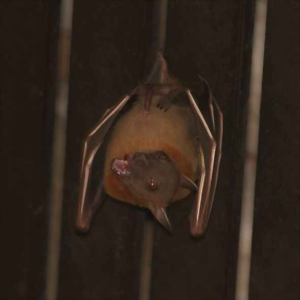 Bats in my porch: 10. The alpha male