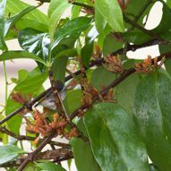 Plant-Bird Relationship: 7. Loranthaceae