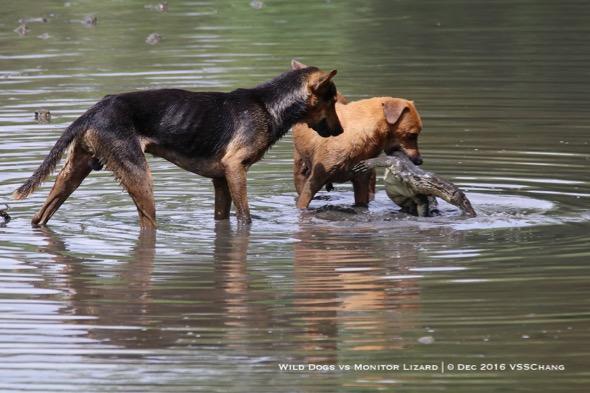 Dogs-MWMonitor [VincentChang] 1