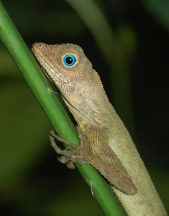 SAVE MACRITCHIE FOREST: 5. REFUGE FOR REPTILES