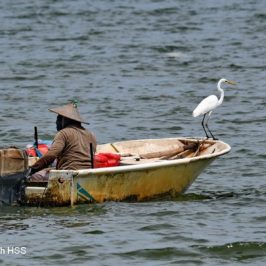 The Egret and the Boatman