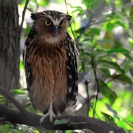 Save MacRitchie Forest: 18. Night birds
