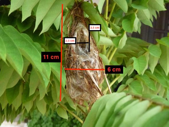 Fl'pkerSB-nest