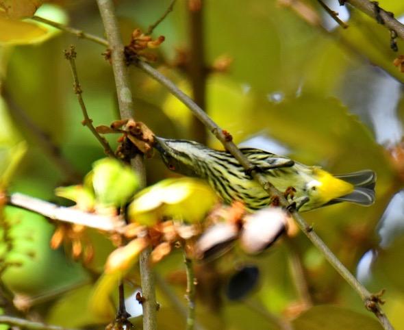 Fl'pkerYV-mistletoe [AmarSingh] 3