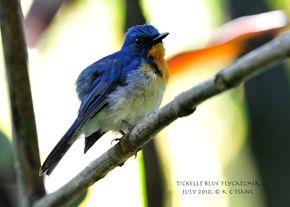 SRI LANKA Birding & Nature Holiday: A newbie's perspective