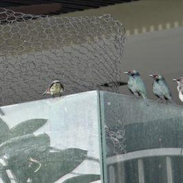 Garden fountain and birds
