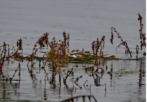 grebel-nest-2-amatsingh