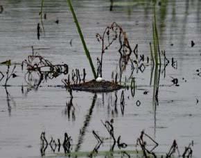 grebel-nest-3-amatsingh