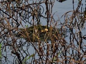 grebel-nest-5-amatsingh