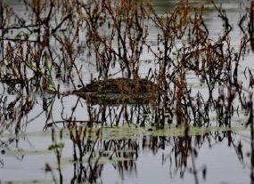 grebel-nest-6-amatsingh