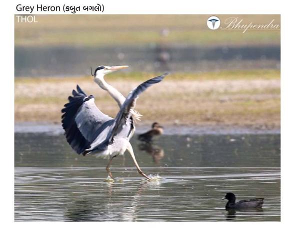 HeronGr [Bhupendra Makwana]