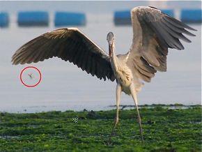 Wings prey collectors edition prophet crack nzb download-Usenet Binaries. .