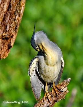 HeronL [AmarSingh]