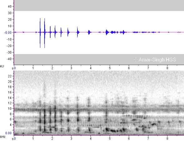 HeronL-sonogram [AmarSingh}