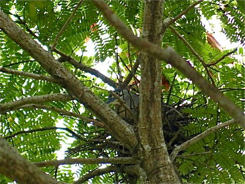Little Heron Nest