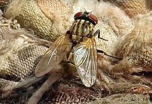 House Fly (Photo credit: Deepak)