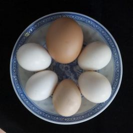 Eggs of the Red Junglefowl