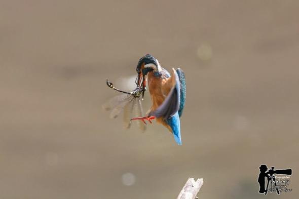 KingfisherC-dragonfly [NeoNg] 3