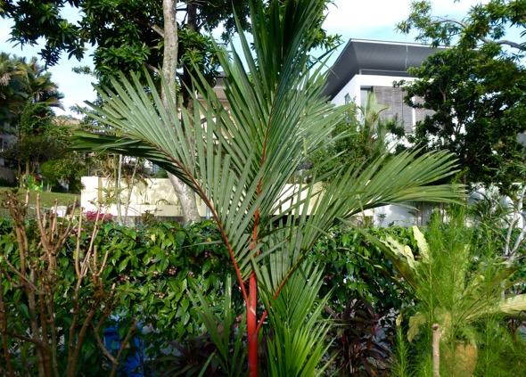 Lipstick Palm