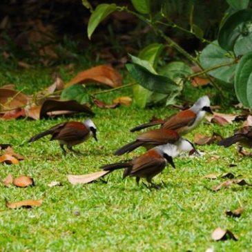 Bukit Batok Nature Park and its bird life