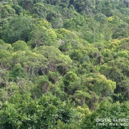 Plant more forest species for more biodiversity