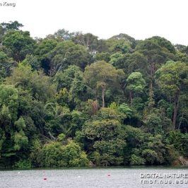 Save MacRitchie Forest: 1. Introduction