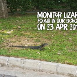 Monitor Lizard spotted in our school