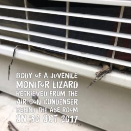 Con, the Monitor Lizard