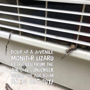 Con, the Monitor Lizard