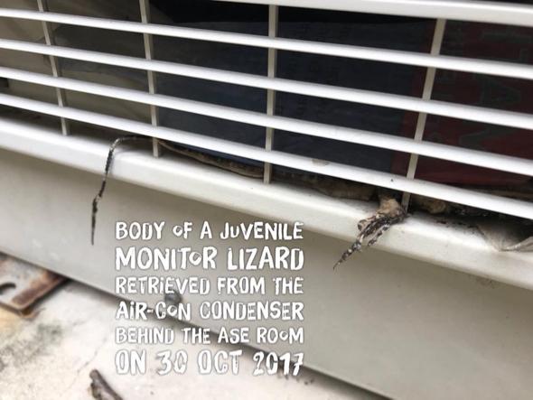 MonitorLizard [JacobTan] 1