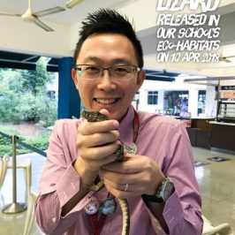 Malayan Monitor Lizard released into the school's eco-wetland