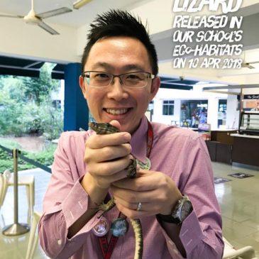 Malayan Monitor Lizard released into the school's eco-wetland