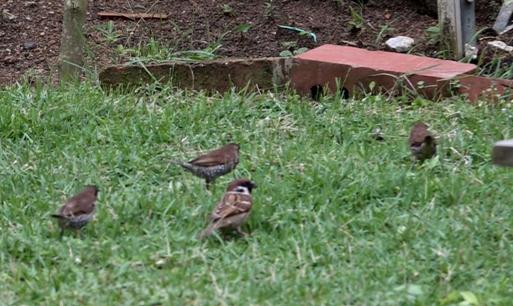 MuniaSB with SparrowET-forage