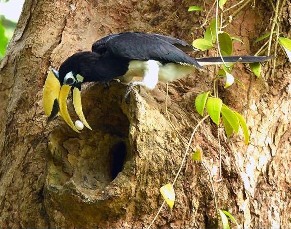 OPH-egg at nest [JWee] 1
