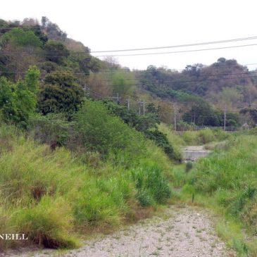 © Count Down for Fairy Pitta in Huben Village Taiwan ROC