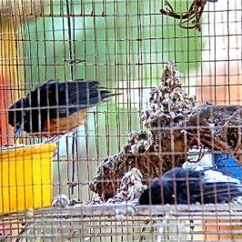 © BIRDWALK WITH AVIAN WRITER – Plight Of Birds 1