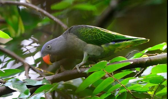 SAVE MACRITCHIE FOREST: 11. Birds and their Status