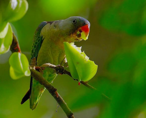 Parrot Eating Cat Food