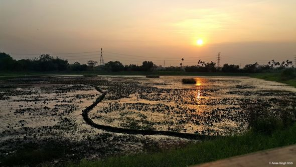 The Jacana Fields of Taiwan (A Lesson in Conservation & Advocacy to Asian Neighbours)