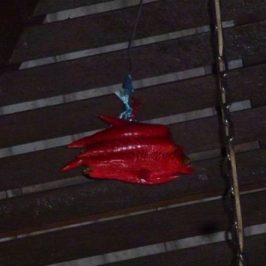 Bats roosting in my porch: 24. A bag of red chillies
