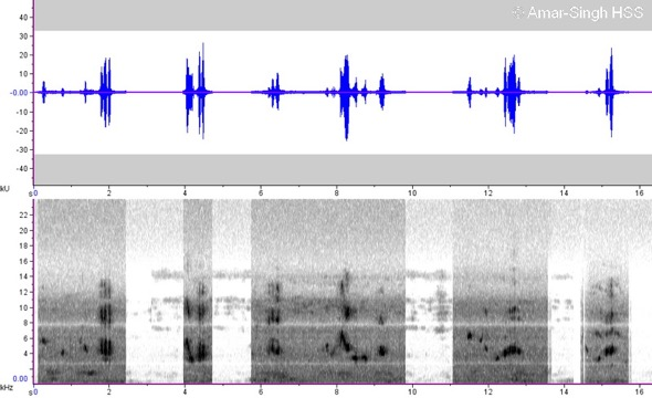 RockThrushBl-calls sonogram [AmarSingh]