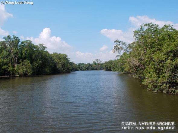 Sungei Buloh Wetland Reserve (Photo credit: Wang Luan Keng)
