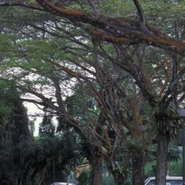 Gardening for birds: 3. Trees