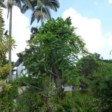 A list of birds in my garden – how useful is it?