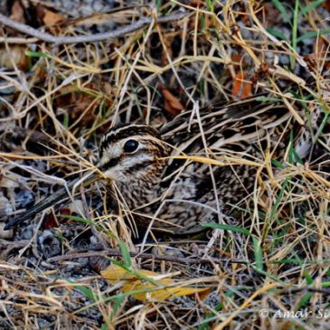 Snipe camouflage
