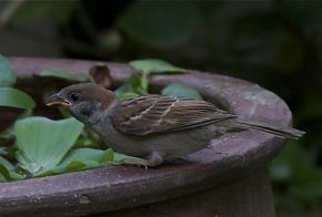 Drinking birds